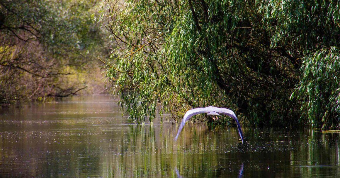 Wild-Danube-Delta