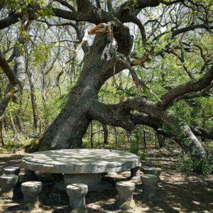 Excursie Padurea Caraorman – Localitatea Mila 23