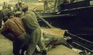 pescari-sturioni-sfantu-gheorghe